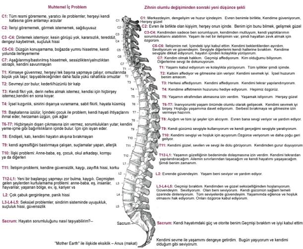 bağlantı tablosu omurga